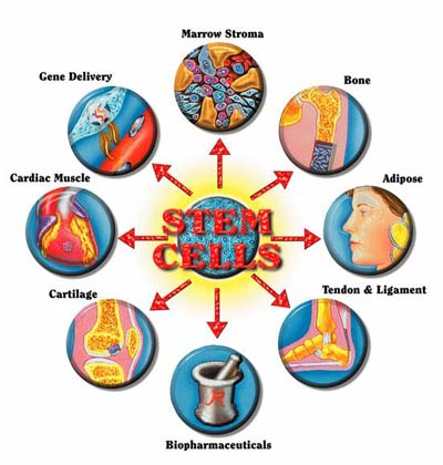stem cells 2 what i gay looking dude in My Photos by josh Stewart ► ◄