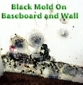 Health Risks Of Black Mold