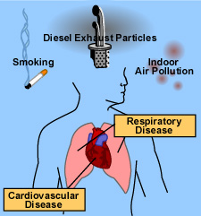 How Air Pollution Is Damaging Your Health